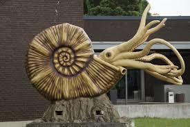 the world u0027s best photos 100 ammonit com history amazon com bullyland ammonite