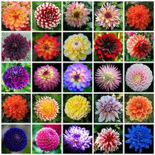 aliexpress com buy marseed 50 pcs rare flower plant pot gorgeous
