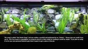 louisiana native plants louisiana native 125 gallon freshwater aquarium hd youtube