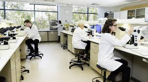 study bachelor of laboratory medicine honours at the university