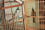 Tiệm chim cảnh 15 Đồng Đen và 56/10 Hoàng Sa. Quận Tân Bình