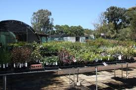 native plant nursery perth albany farm tree nursery nursery wholesale and retail albany