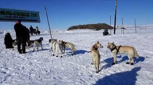 bridgett watkins wins the 2017 nome council 200 sled dog race by
