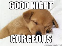 Goodnite Meme - 20 cutest goodnight memes sayingimages com