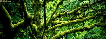 green moss tree cover