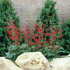 76 best hummingbird garden plants images on pinterest