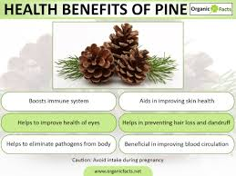 What Vitamin Is Good For Hair Loss 5 Incredible Benefits Of Pine Organic Facts