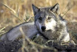 Washington wildlife images Animal nature global warming and wildlife washington enlists jpg