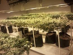proper lights for growing weed grow room setup the perfect cannabis grow room design videos