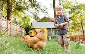 Backyard Chickens Magazine Everything You Need To Know About Raising Backyard Chickens