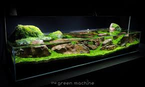 Aquascape Moss Continuity Aquascape Video U0026 Gallery By James Findley The Green