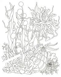 drawn seaweed coloring pencil and in color drawn seaweed coloring