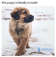 Dog Memes - funny dog memes that will cure your bad day 2 justviral co