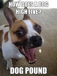 High Dog Meme - best 30 stoned dog meme testing testing