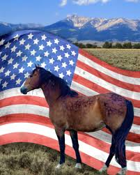 Our Flag Wild Horse Crisis How Will It End Front Range Equine Rescue