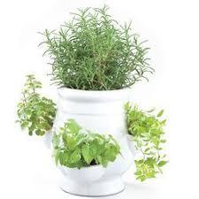 Indoor Herb Garden Kit Best 25 Herb Garden Kit Ideas On Pinterest Standing Planter