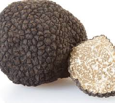 lyophilisation of truffles buchi com