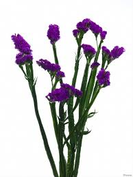 statice flowers ara purple sinuata statice limonium flowers by category