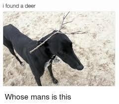 Deer Meme - i found a deer whose mans is this deer meme on esmemes com