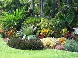 Landscaping Ideas For Florida by Native Florida Plants And Trees For Your Landscaping Design 13th