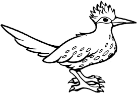 roadrunner bird coloring free printable coloring pages