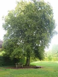 majestic tree picture of highclere castle newbury tripadvisor
