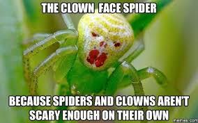 Funny Spider Meme - lovely spider meme testing testing