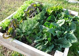 When To Plant Spring Vegetable Garden by Garden Library I Feel A Salad Coming On U2026 Halleck Horticultural