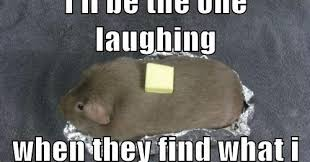 Guinea Pig Meme - social pet saturday guinea pig edition pawsitively pets
