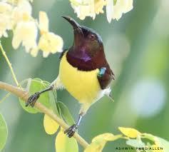 birdsinbackyards hashtag on twitter