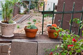 Organic Vegetable Gardening Annette Mcfarlane by Homemade Natural Possum Repellent Home Guides Sf Gate