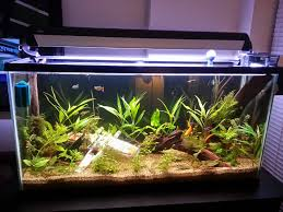 desktop dagobah aquarium get get nerdy aquariums