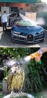 Bugatti Meme - bugatti chiron vs owl funny memes daily lol pics