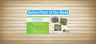 southwest native plants city of lubbock water department home