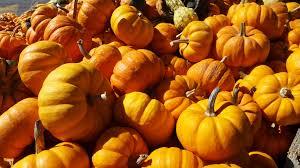 free images fall flower orange produce autumn pumpkin