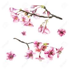 watercolor cherry blossom hand draw cherry blossom sakura branch