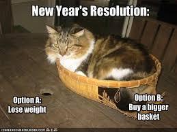 Happy New Year Cat Meme - happy new year from jokideo