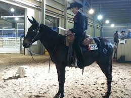 nov 3 2013 u2013 western dressage world show update clearview horse