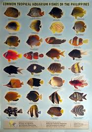 marine aquarium fish list aquarium design ideas