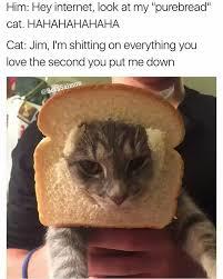 Hey Internet Meme - nasty pussy meme by superilluminati memedroid