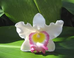Orchid Corsage Hawaiian Monkey Bizz