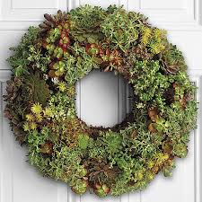 succulent wreath living succulent wreath
