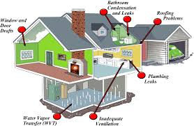 mold in basements attics and more where toxic mold may be hiding