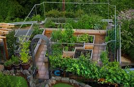 it u0027s vegetables with a view on this magnolia rooftop garden the