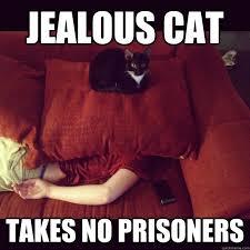 jealous cat meme cat planet cat planet