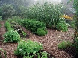 how to start a no till garden from scratch
