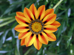 Yellow Orange Flowers - 30 beautiful flower images free to download flowers flower and