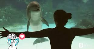 AMAZING  Girl Makes Dolphin Laugh Is Nothing You Would Have Expected To See     GAG tv