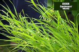 splitting ornamental grasses gardenersworld