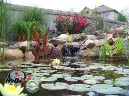 native pond plants for sale aquatic pond plants supplier near lexington kentucky ky h2o designs